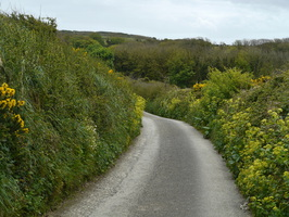 Typische Single Road in Cornwall